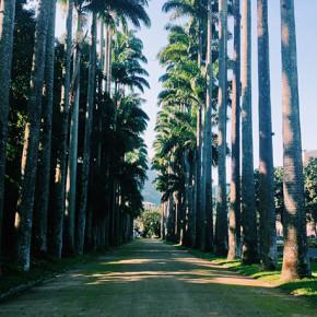 〖大笑到巴西〗在 Jardim Botânico 植物園光合作用