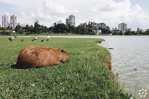 Curitiba-yoursunshine-13